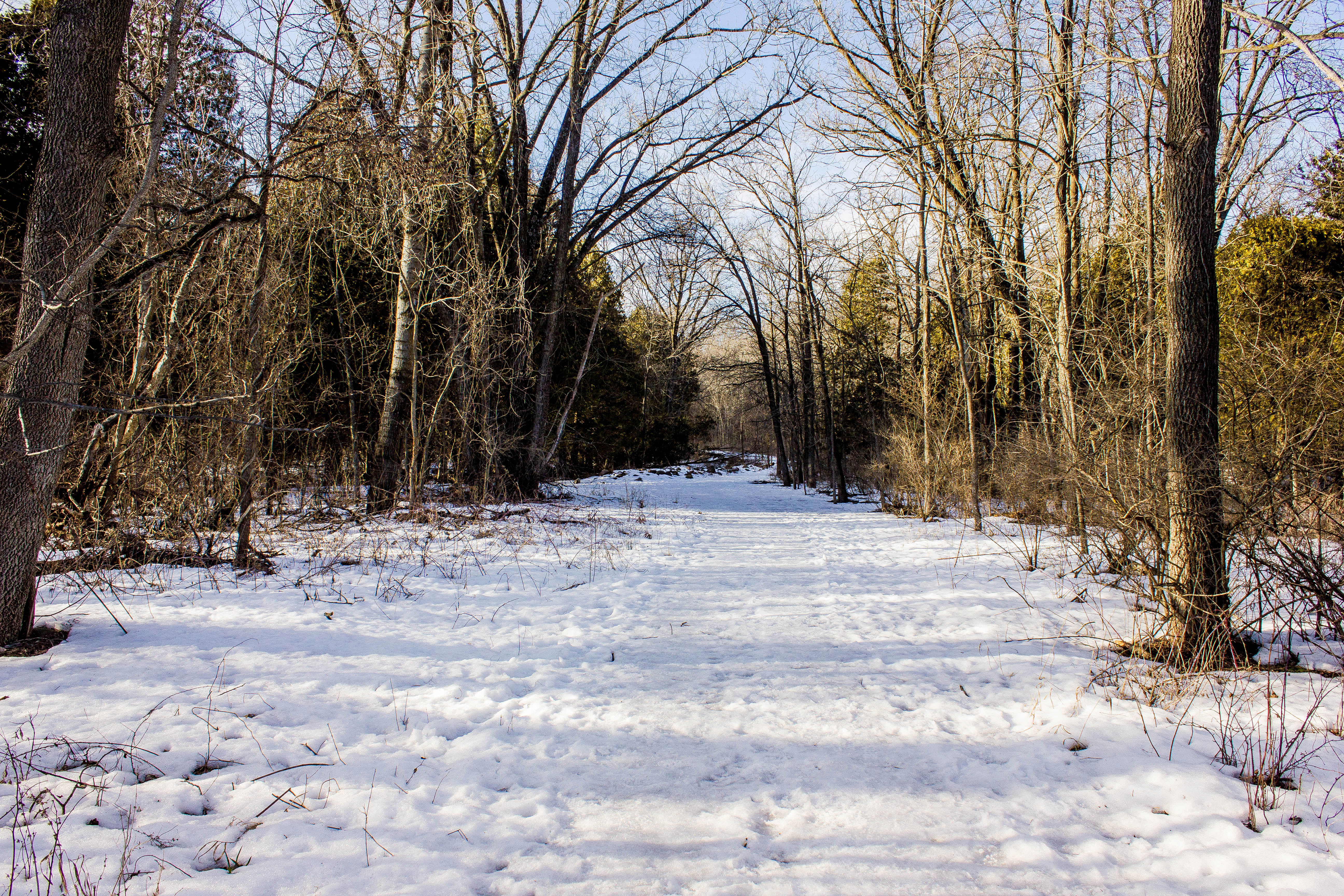 Scenic Of Snowy Trail By Frozen Stream With Common Alder Trees In ...