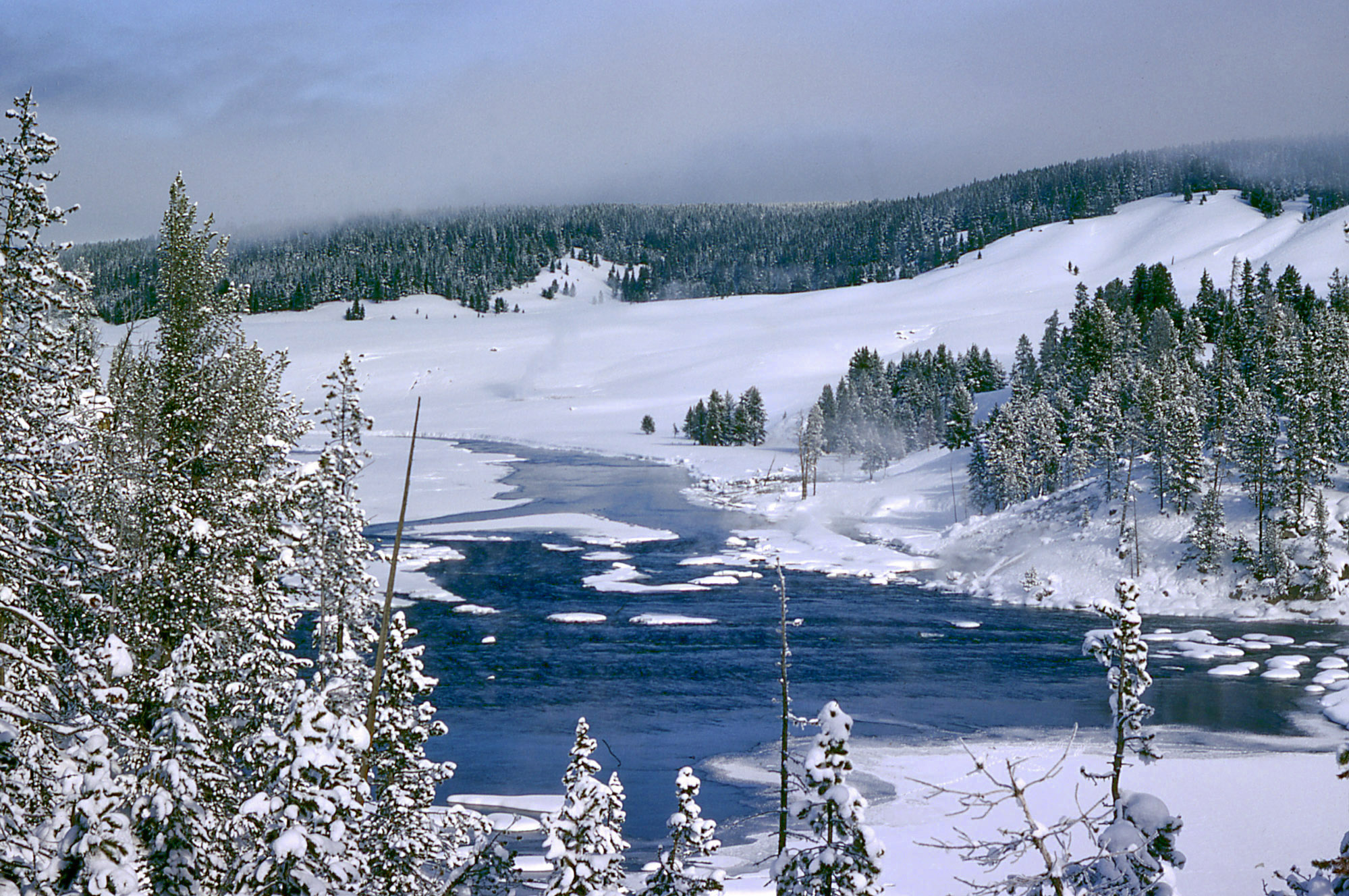 Winter Landscape Scene In Yellowstone National Park Wyoming