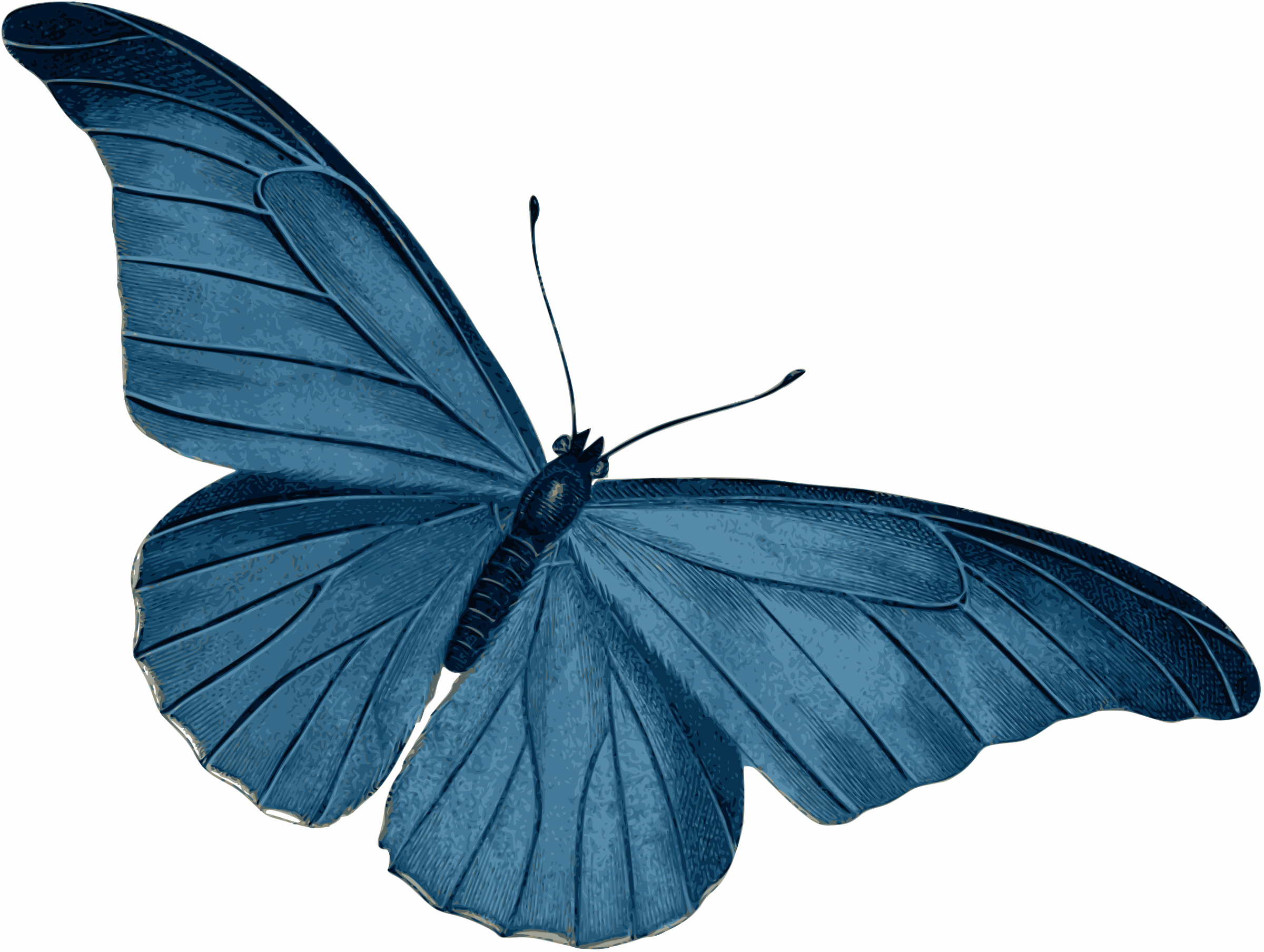 Blue Butterfly Vector Art Image Free Stock Photo Public Domain