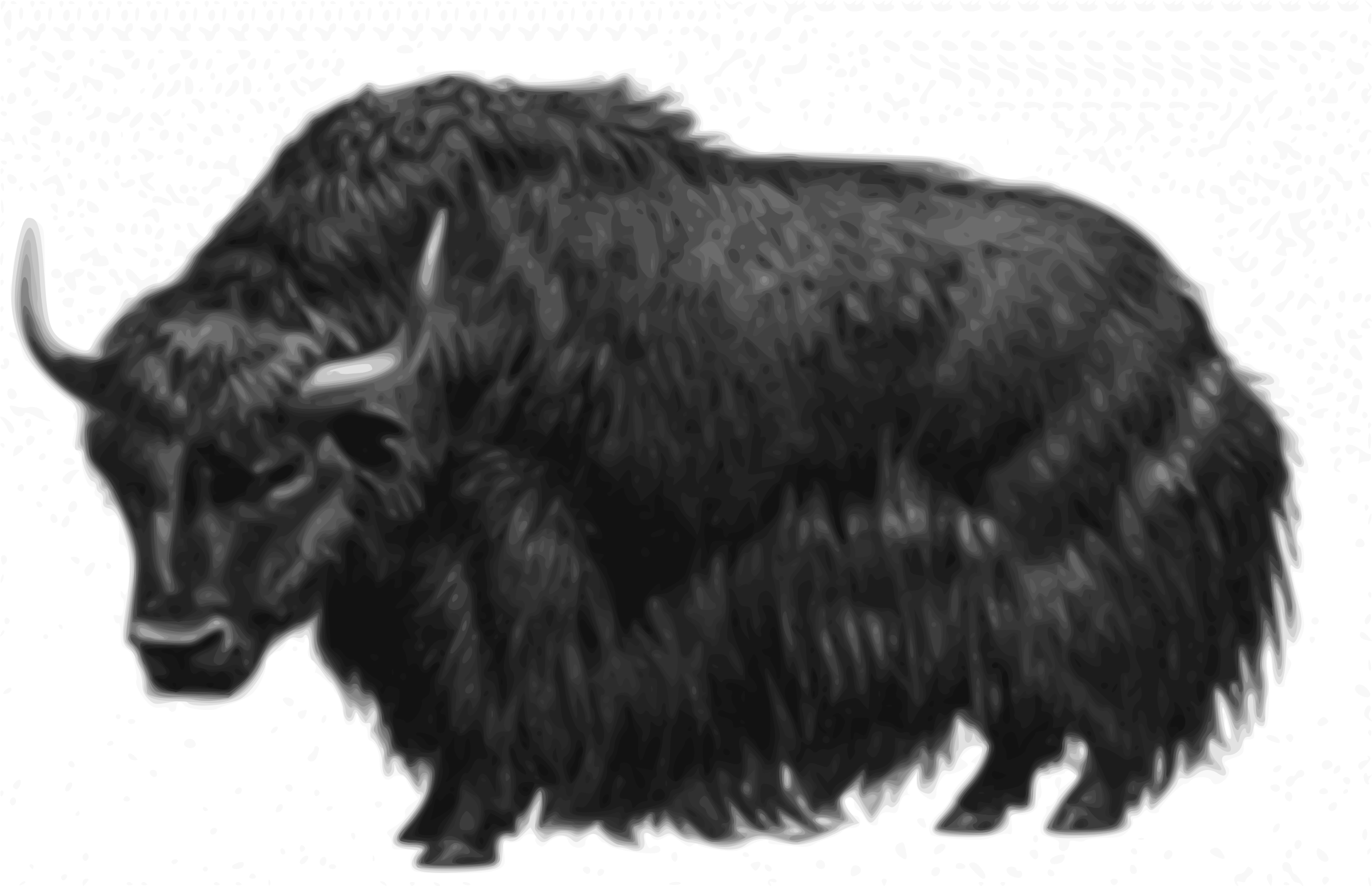 Image Of A Yak: Bull Yak Vector Clipart Image