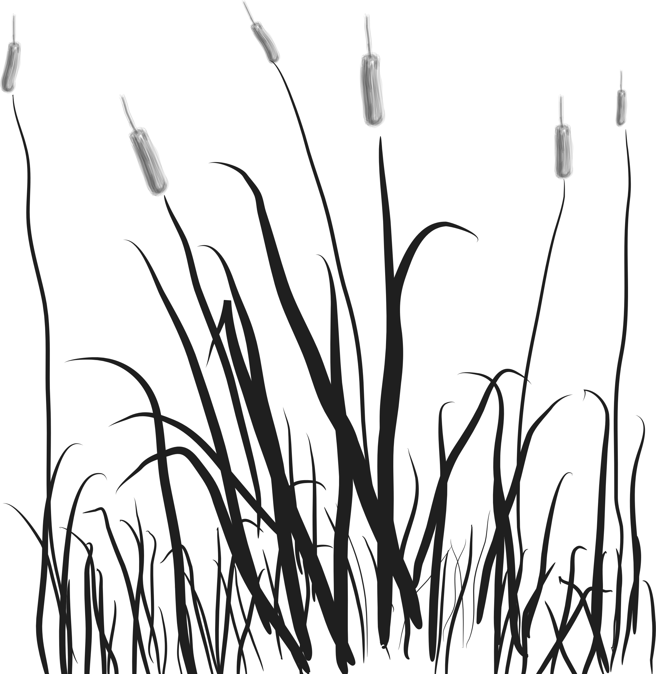 Marsh Grass Drawing Images - Reverse Search