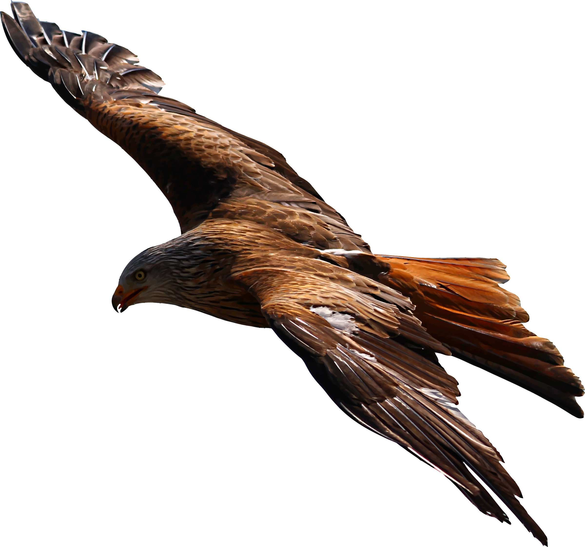 Free stock photo of flying eagle vector file public domain photo flying eagle vector file graphic by public domain altavistaventures Images