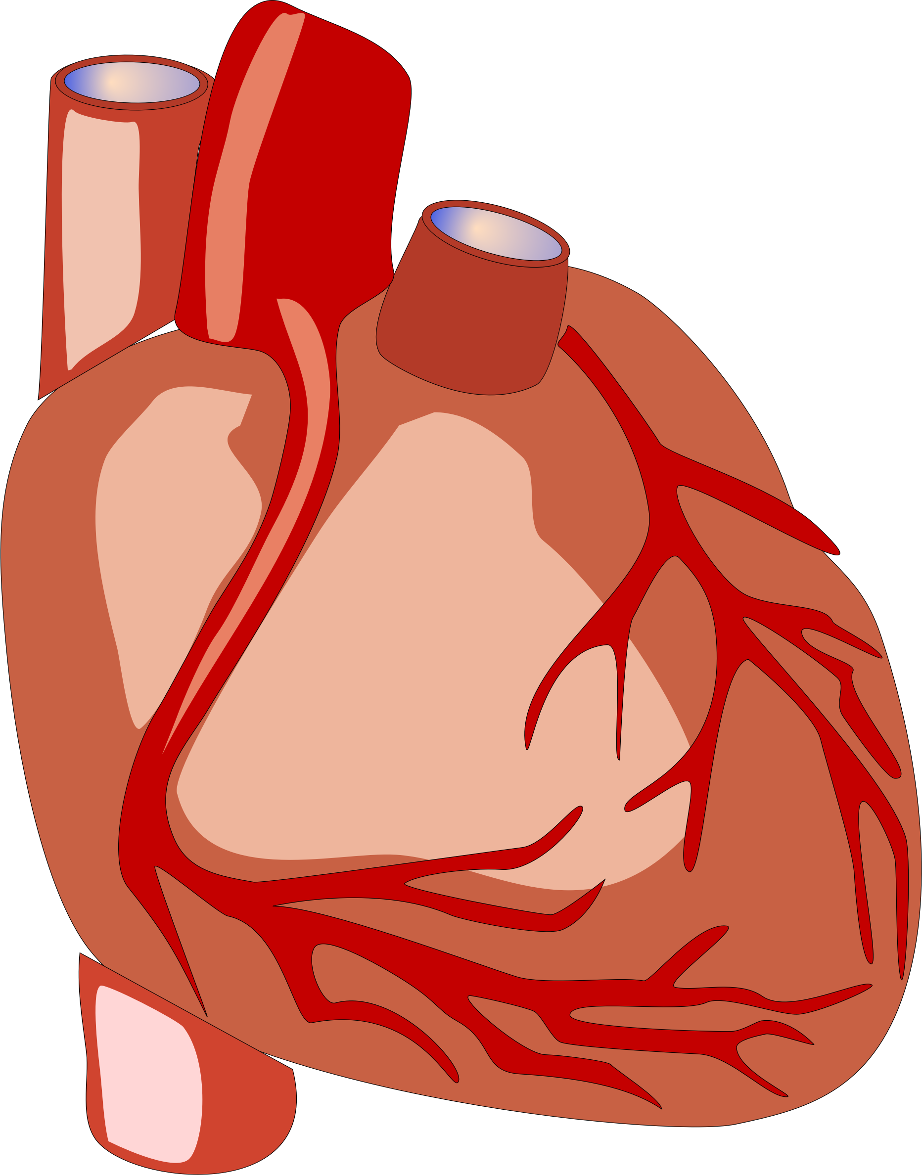 Human Heart vector file - Free Public Domain Stock Photo - CC0 Images