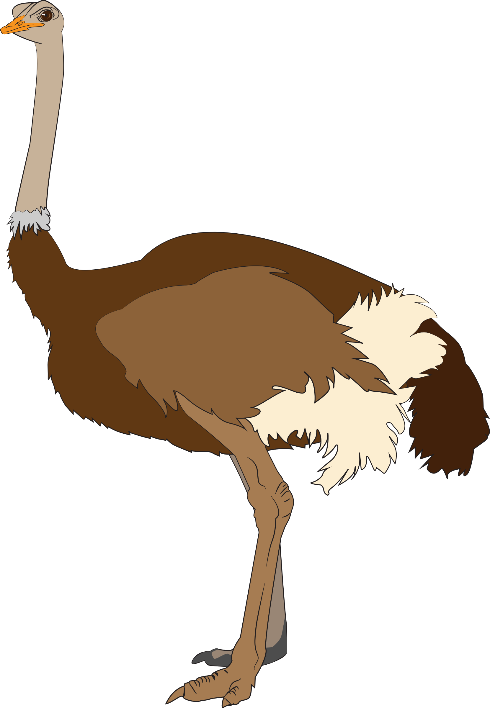 Ostrich vector clipart image free stock photo public for Graphics clipart