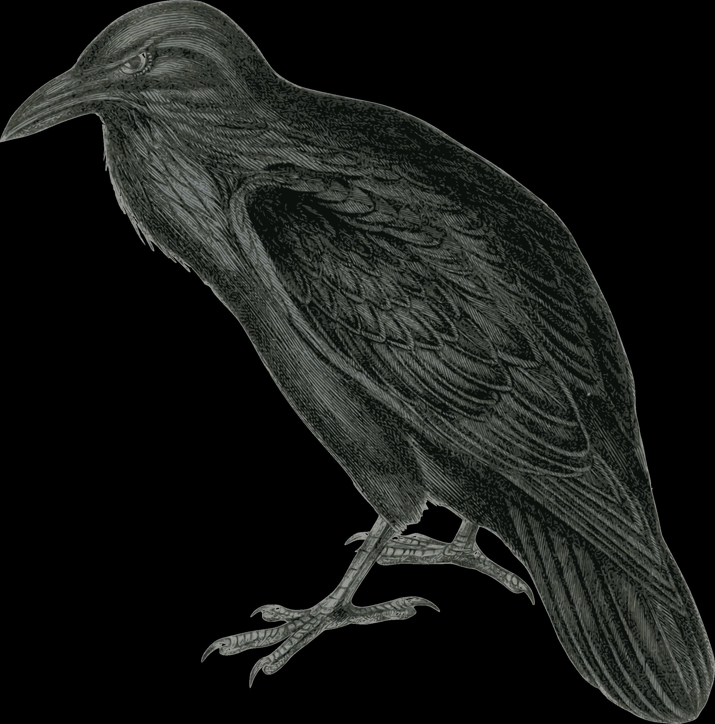 Raven Vector Clipart image - Free stock photo - Public ...