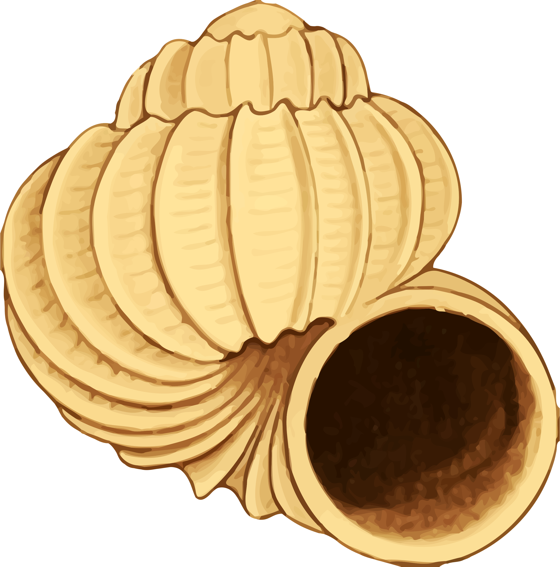 twisting conch shell vector clipart image free stock photo rh goodfreephotos com