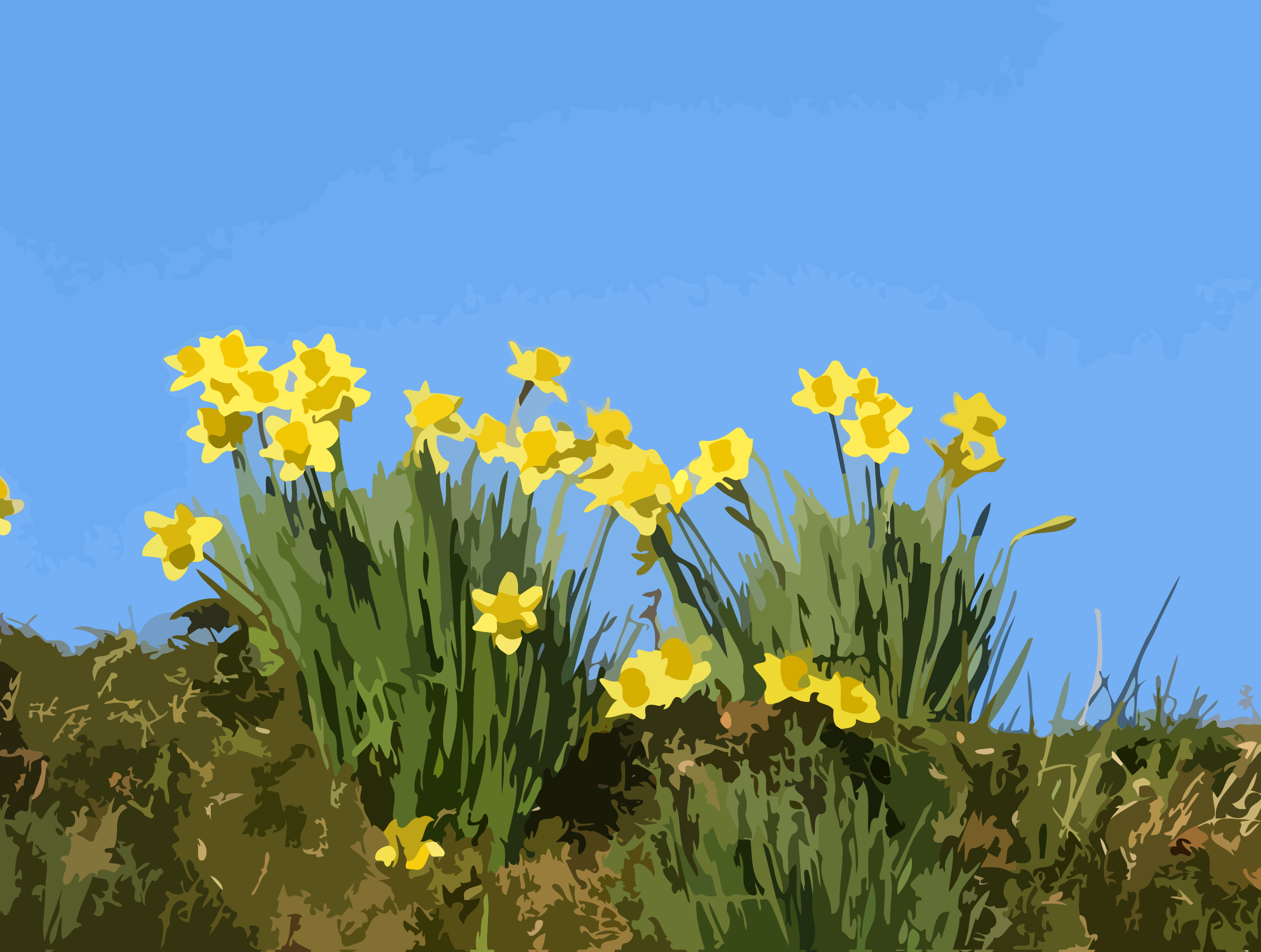 Yellow Daffodil Flowers vector clipart image - Free stock ...