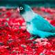 Bird in the middle of red flowers