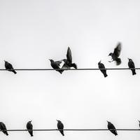 Birds Flying and Perched on the wires