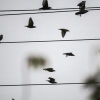Birds flying off the wire