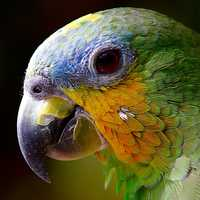 Close up detail of Parrot's Head
