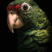Close up detail of the parrot