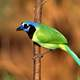 Exotic Blue-Green Bird