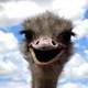 Funny Ostrich facial expression