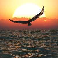 Large Bird flying over the ocean at sunset