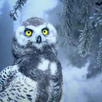 Owl in the winter