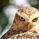 Owl looking intensely at you with scary eyes