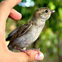 Small Bird on thumb