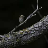 Small Bird standing on a branch