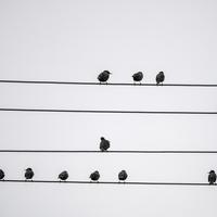 Small Birds standing on the wire