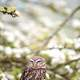 Small owl in the white flower trees
