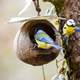 Two Blue Tits at the nest