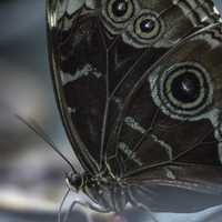 Blue and black winged butterfly