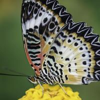 Bright Yellow, Orange, and Black Butterfly