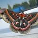 Cecropia Moth landing on Window - Hyalophora cecropia