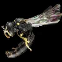 Close up of Bee Anatomy