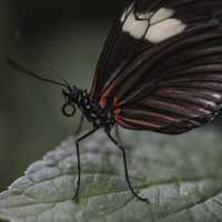 Closeup of black and red Butterfly