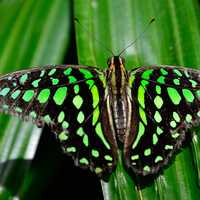 Green and black butterfly on grass