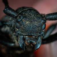 Head of a beetle close up