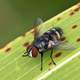 Macro Close Up of a fly