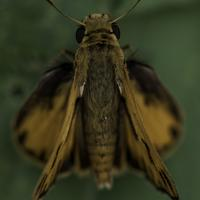 Macro shot of a moth