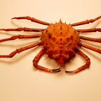 Inflated spiny crab -- Rochinia crassa