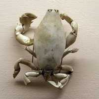 Lyreidus tridentatus - a species of crab