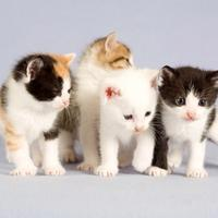 Baby kittens in a group