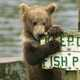 Bear chewing on the sign