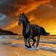 Black Beauty Stallion, Horse