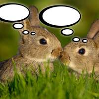 Bunnies with thought bubbles