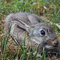 Bunny crouching in grass