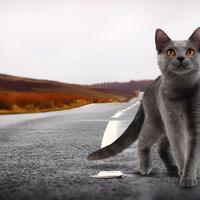 Cat on the road staring up