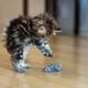Cat playing with toy mouse