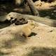 Cute Prairie Dog Photo