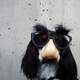 Dog wearing funny mask with glasses