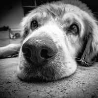 Grayscale Photo of Dog lying on floor
