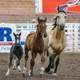 Horses at the Rodeo