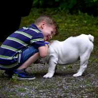 Kid playing with Dog