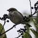 Small Bird on a Branch